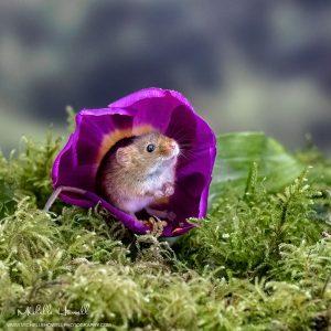 Purple Tulip Mouse House